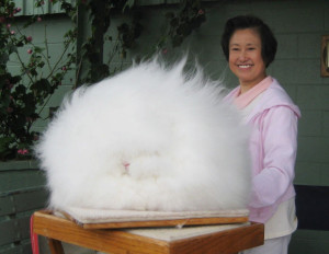 Angora Source: Totally Warm