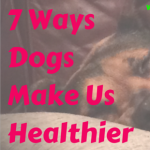 7 Ways Dogs Make Us Healthier